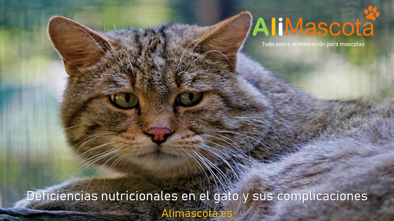 Deficiencias nutricionales en el gato