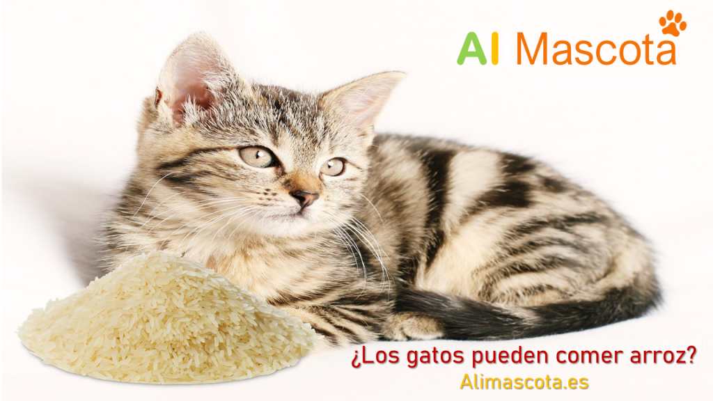 Los gatos pueden comer arroz