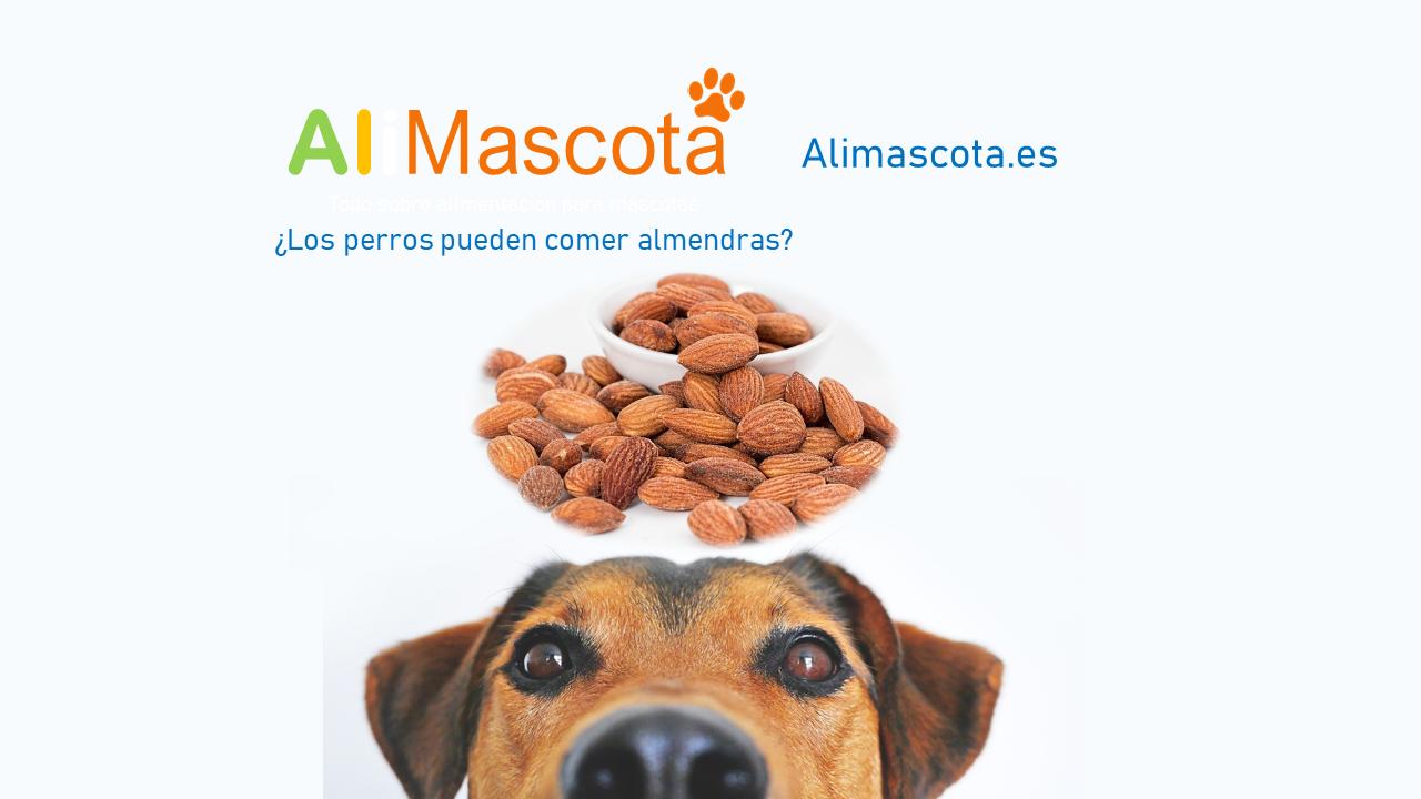 ¿Los perros pueden comer almendras?