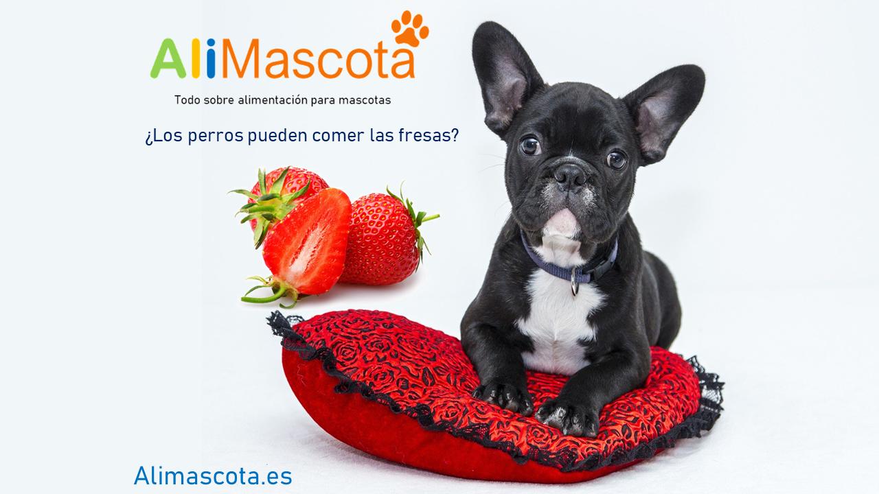 ¿Los perros pueden comer fresas?