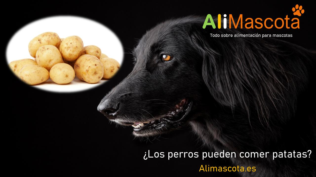 Los perros pueden comer patatas