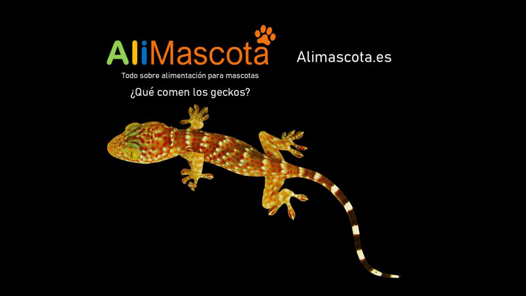 que comen los geckos