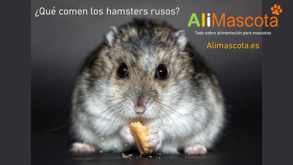 Qué comen los hamsters rusos