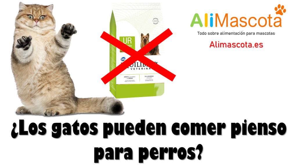 Los gatos pueden comer pienso para perros