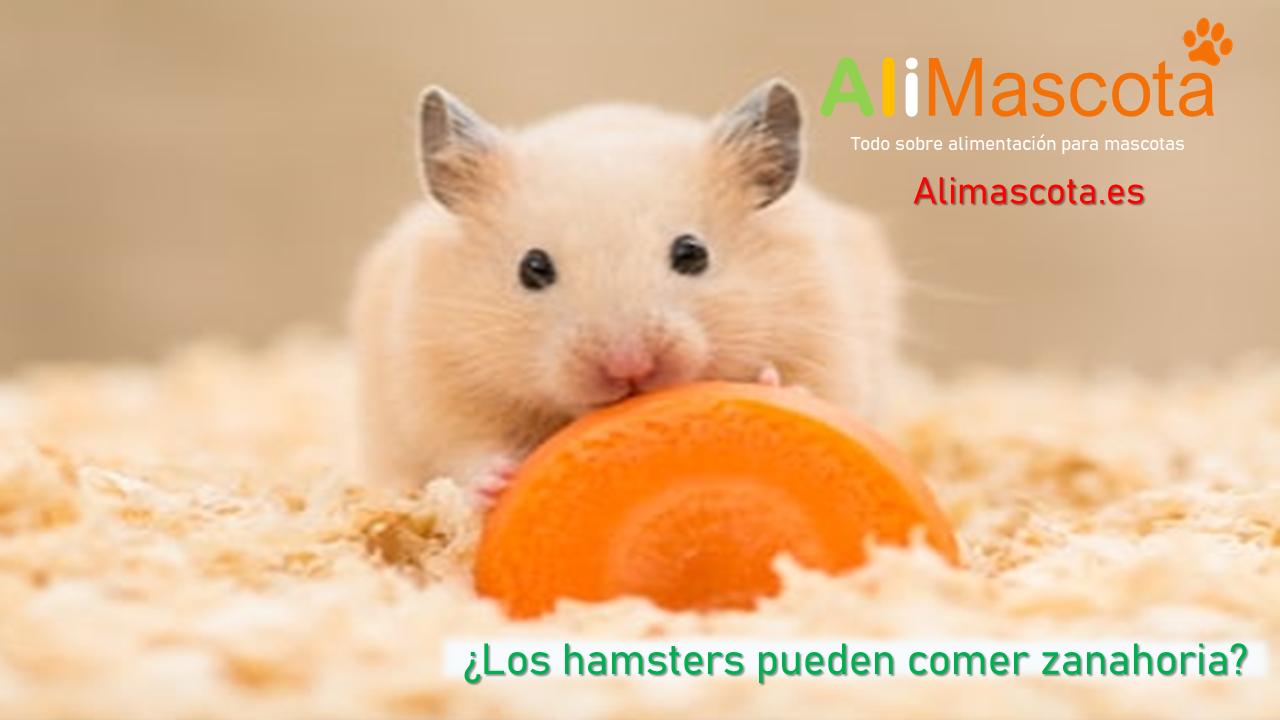 Los hamsters pueden comer zanahoria