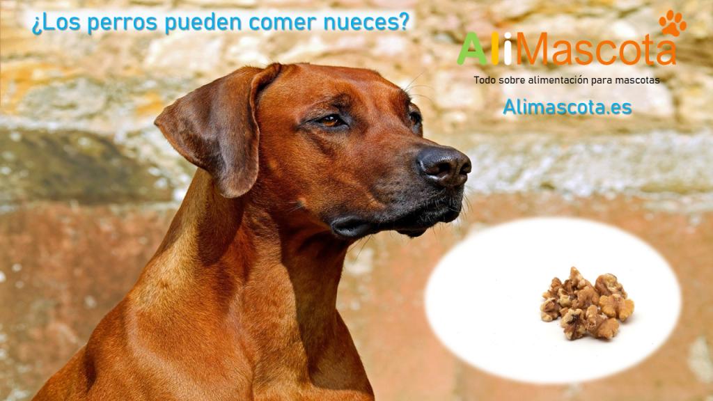 Los perros pueden comer nueces