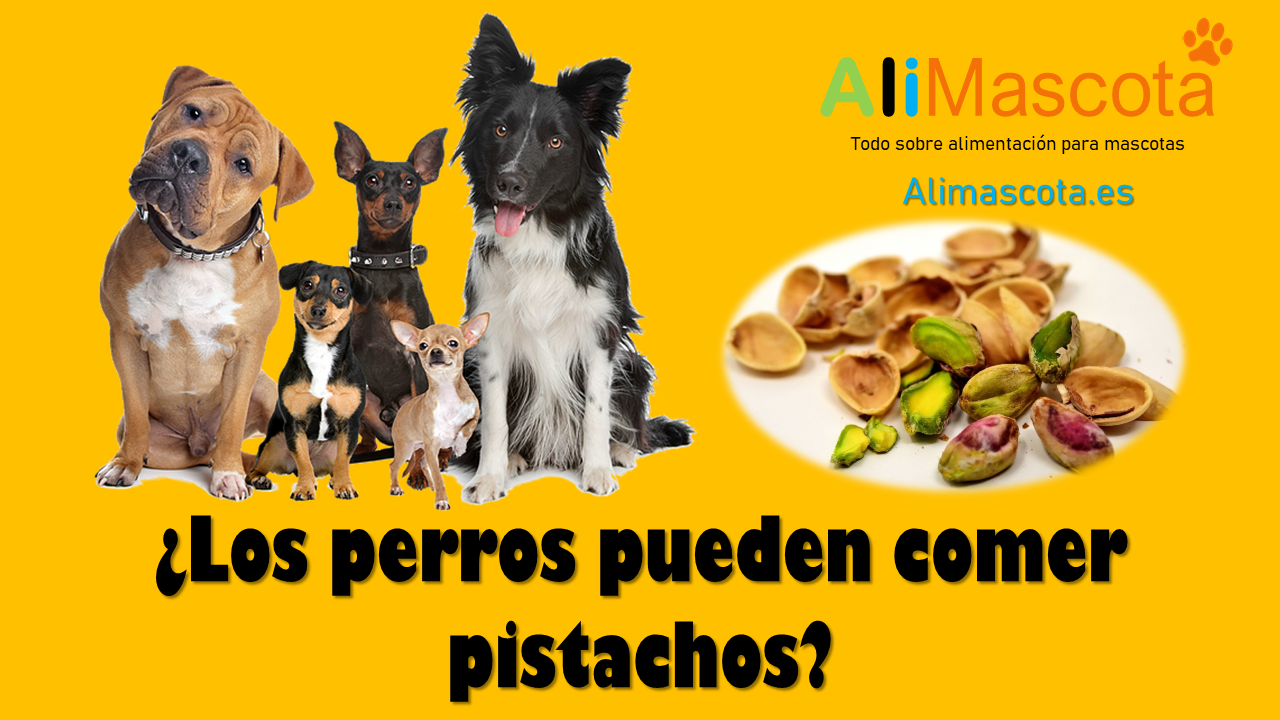 Los perros pueden comer pistachos