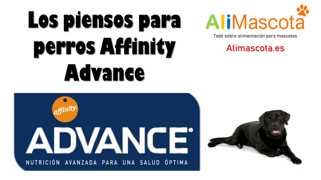 Pienso perros Affinity Advance