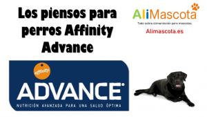 Los piensos para perros Affinity Advance