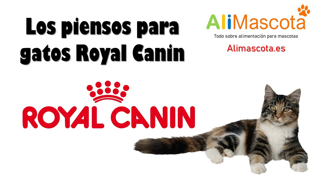 Pienso gatos Royal Canin