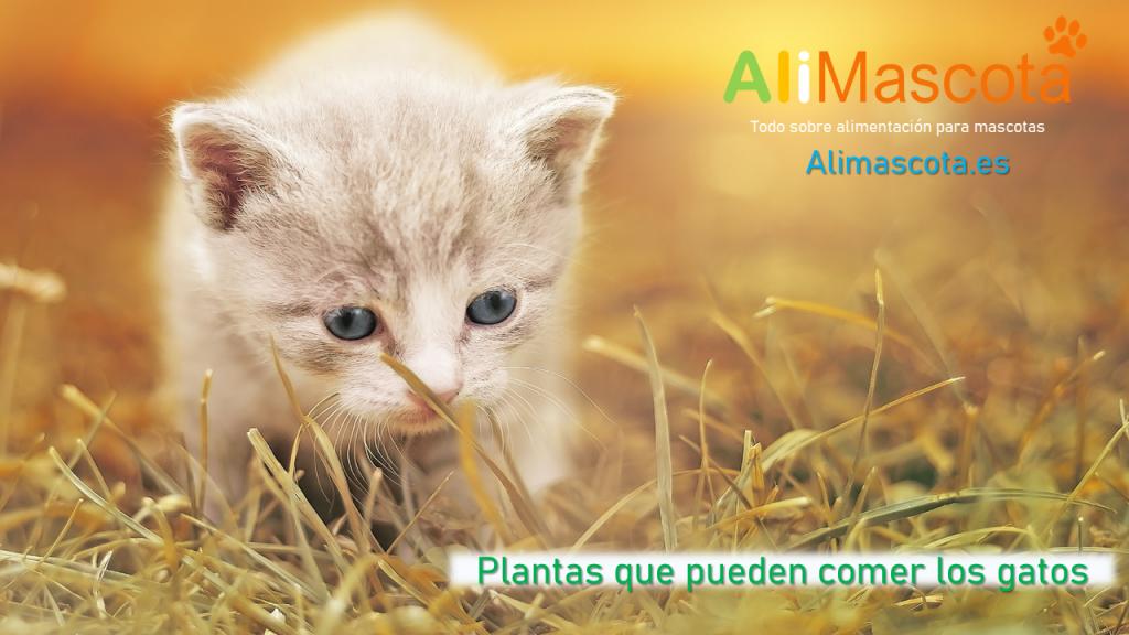 Plantas que pueden comer los gatos