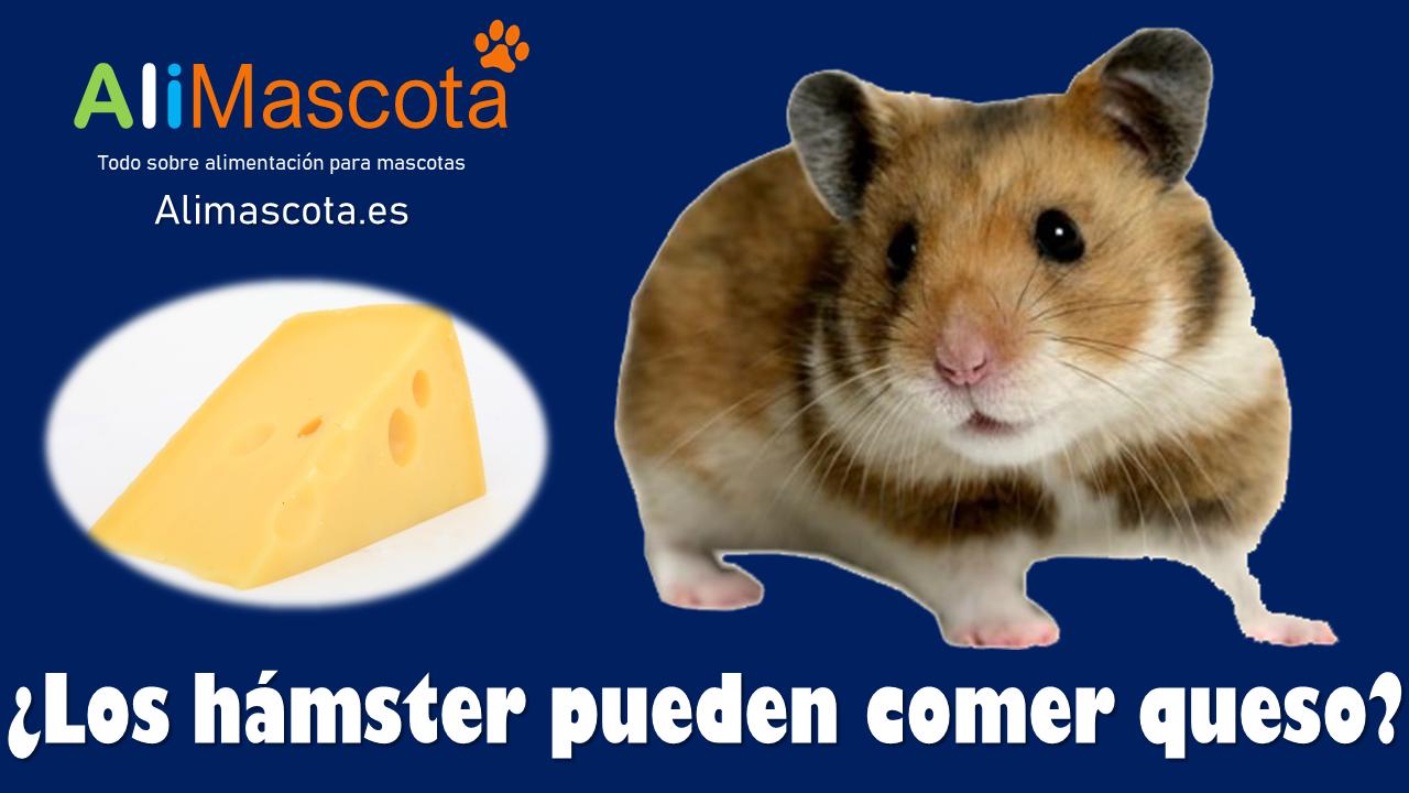 Los hamsters pueden comer queso