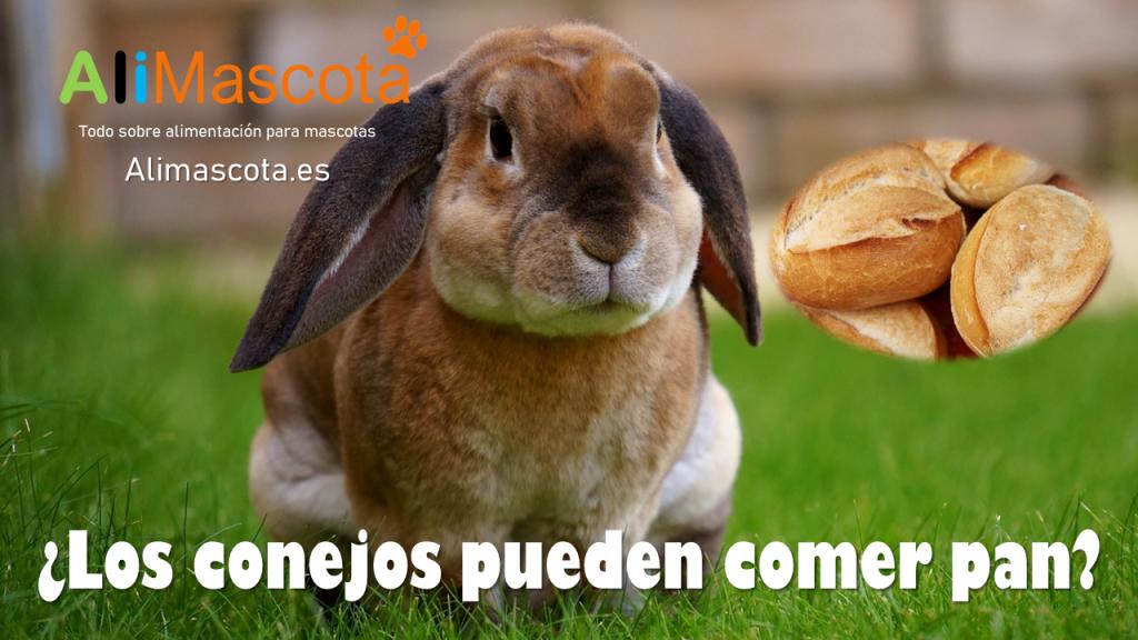 Los conejos pueden comer pan