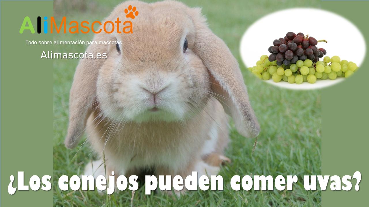 Los conejos pueden comer uvas