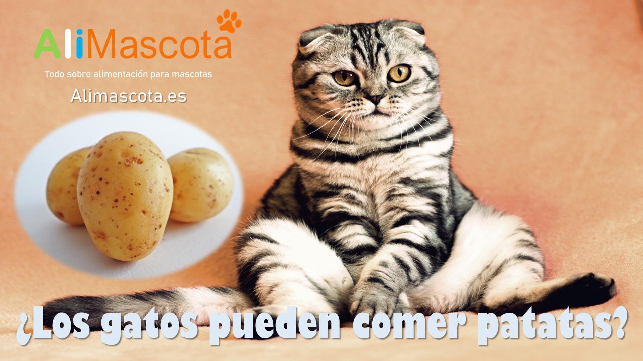 Los gatos pueden comer patatas