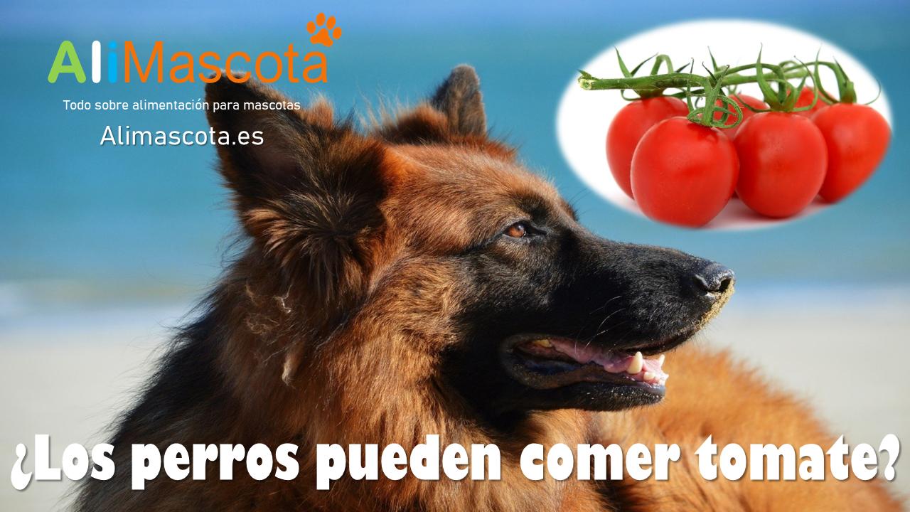 Los perros pueden comer tomate