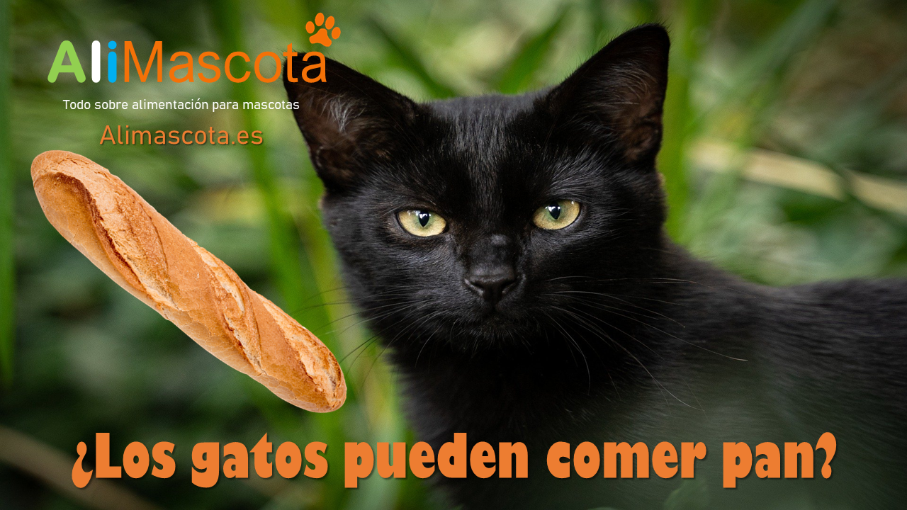 Los gatos pueden comer pan