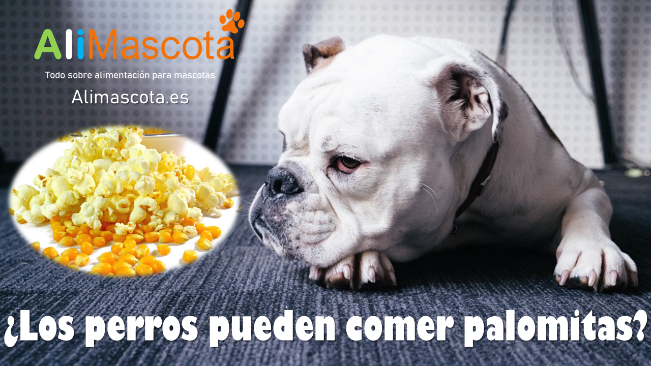 Los perros pueden comer palomitas