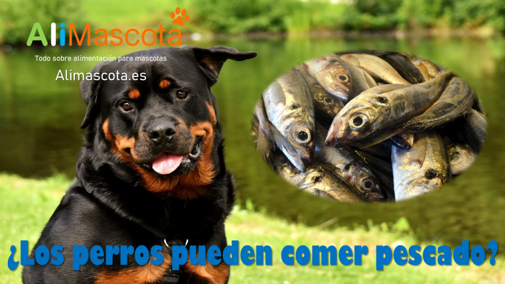 Los perros pueden comer pescado