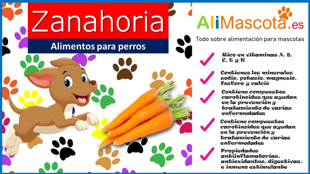 Propiedades de la zanahoria en los perros