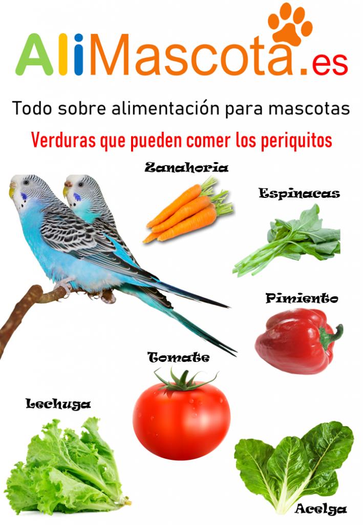 Verduras para periquitos