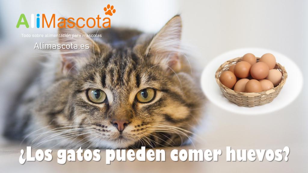 Los gatos pueden comer huevos