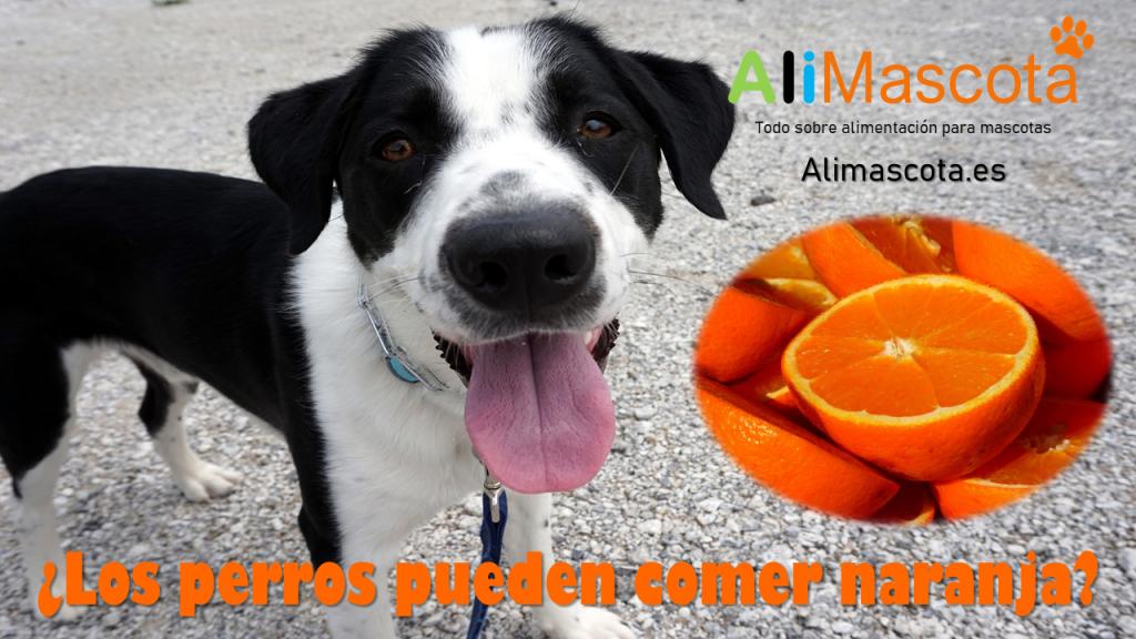 Los perros pueden comer naranja