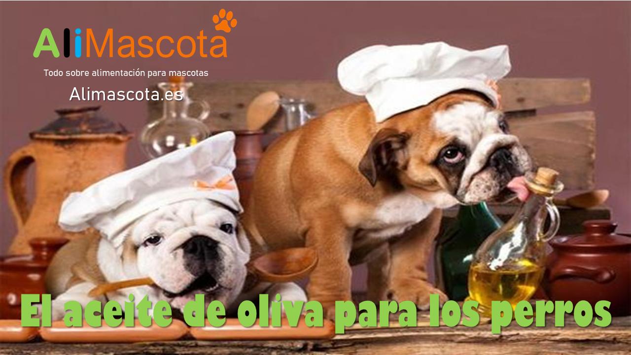 el aceite de oliva para los perros