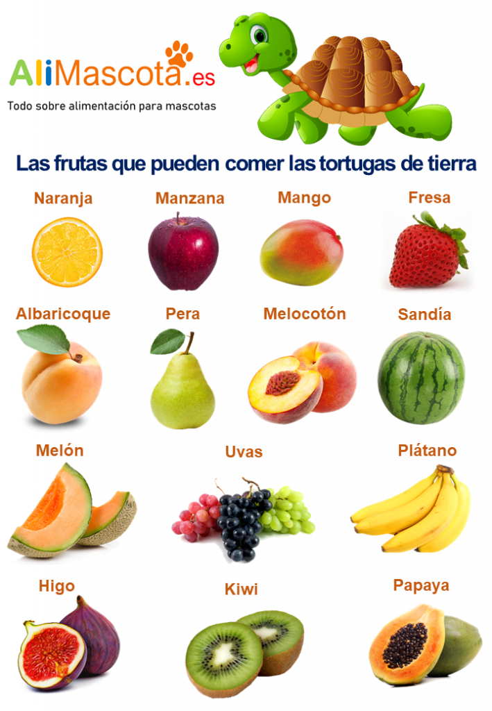 Frutas para tortugas de tierra