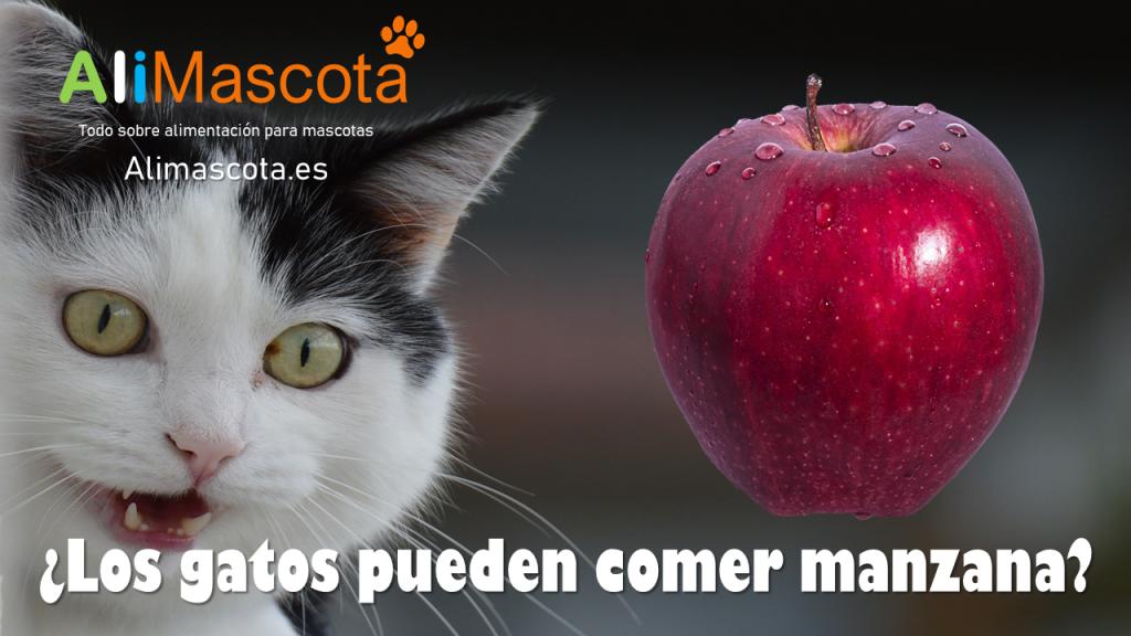 Los gatos pueden comer manzana