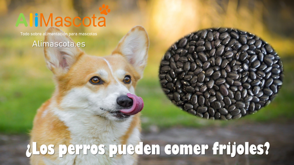 los perros pueden comer frijoles