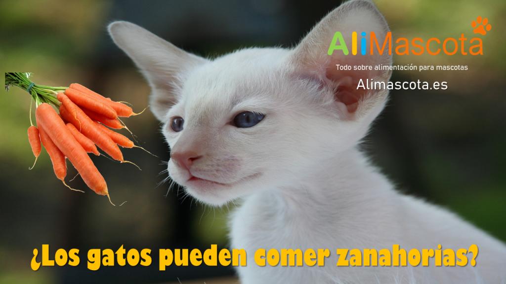 los gatos pueden comer zanahorias