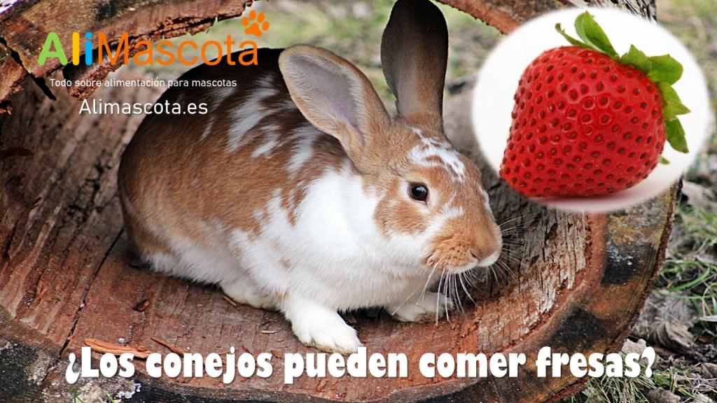 Los conejos pueden comer fresas