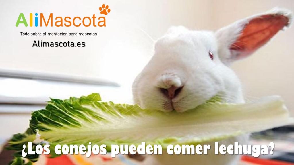 Los conejos pueden comer lechuga