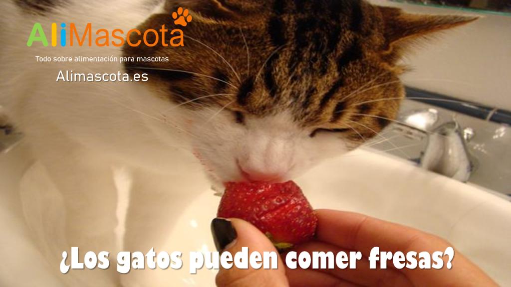 Los gatos pueden comer fresas