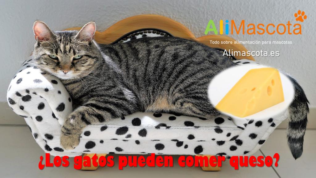 los gatos pueden comer queso