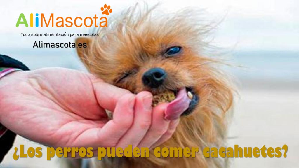 los perros pueden comer cacahuetes