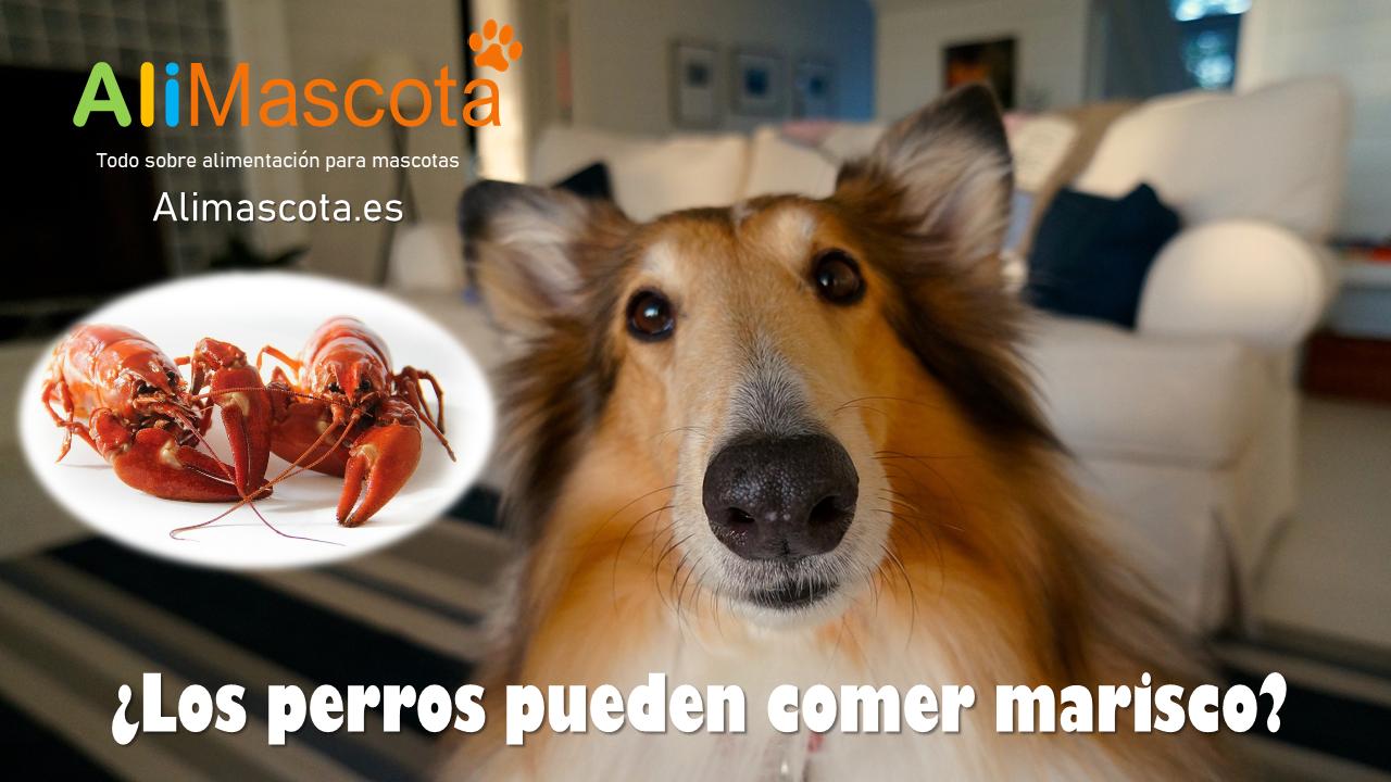 los perros pueden comer marisco