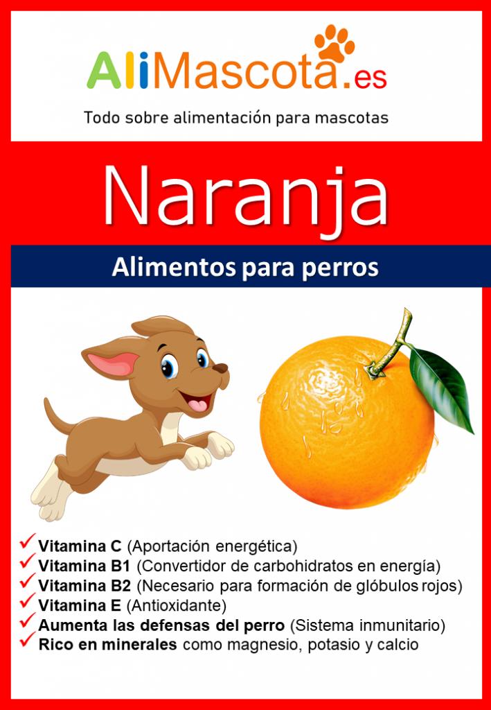 naranja para perros