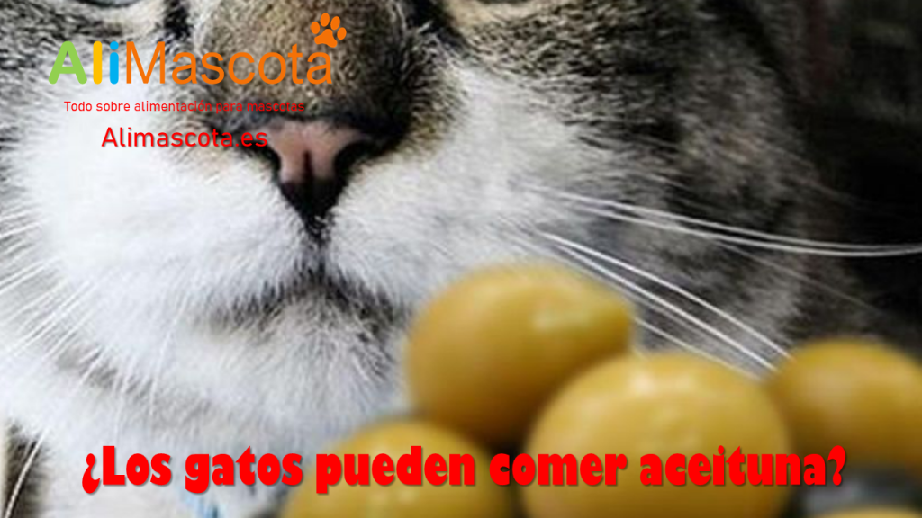 Los gatos pueden comer aceiuna