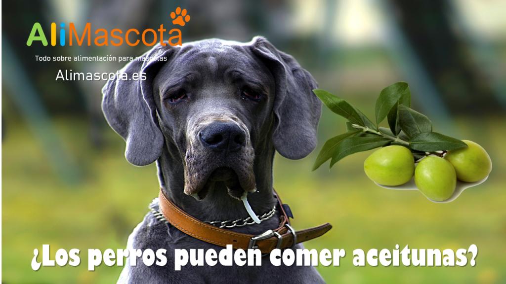 Los perros pueden comer aceitunas