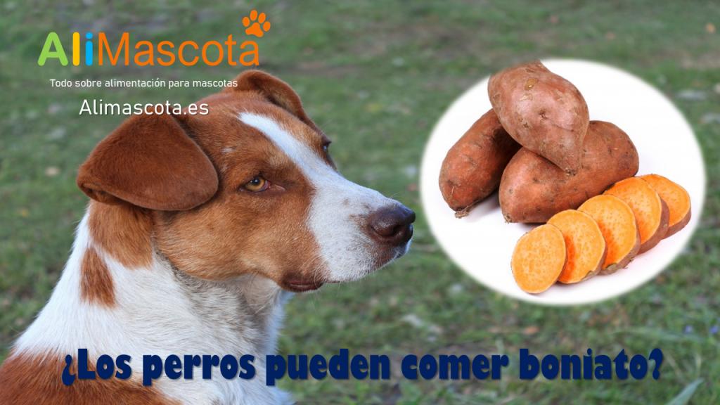 Los perros pueden comer boniato