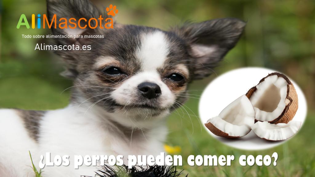 Los perros pueden comer coco