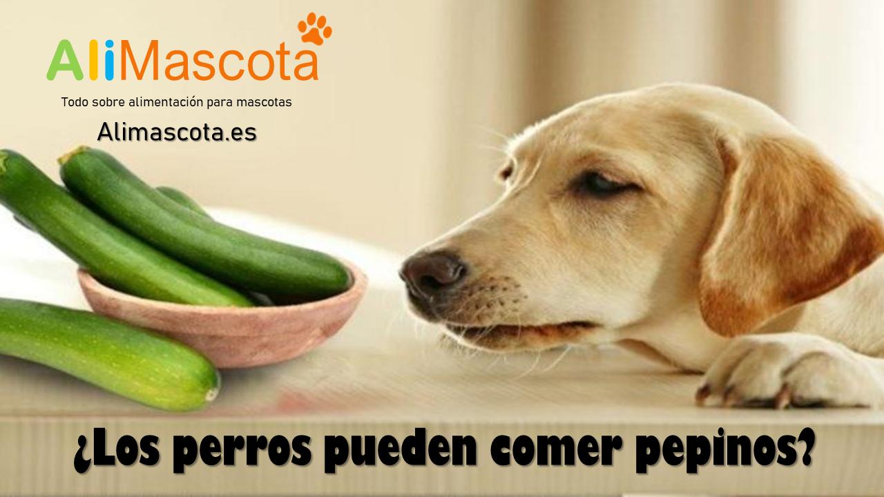 Los perros pueden comer pepinos