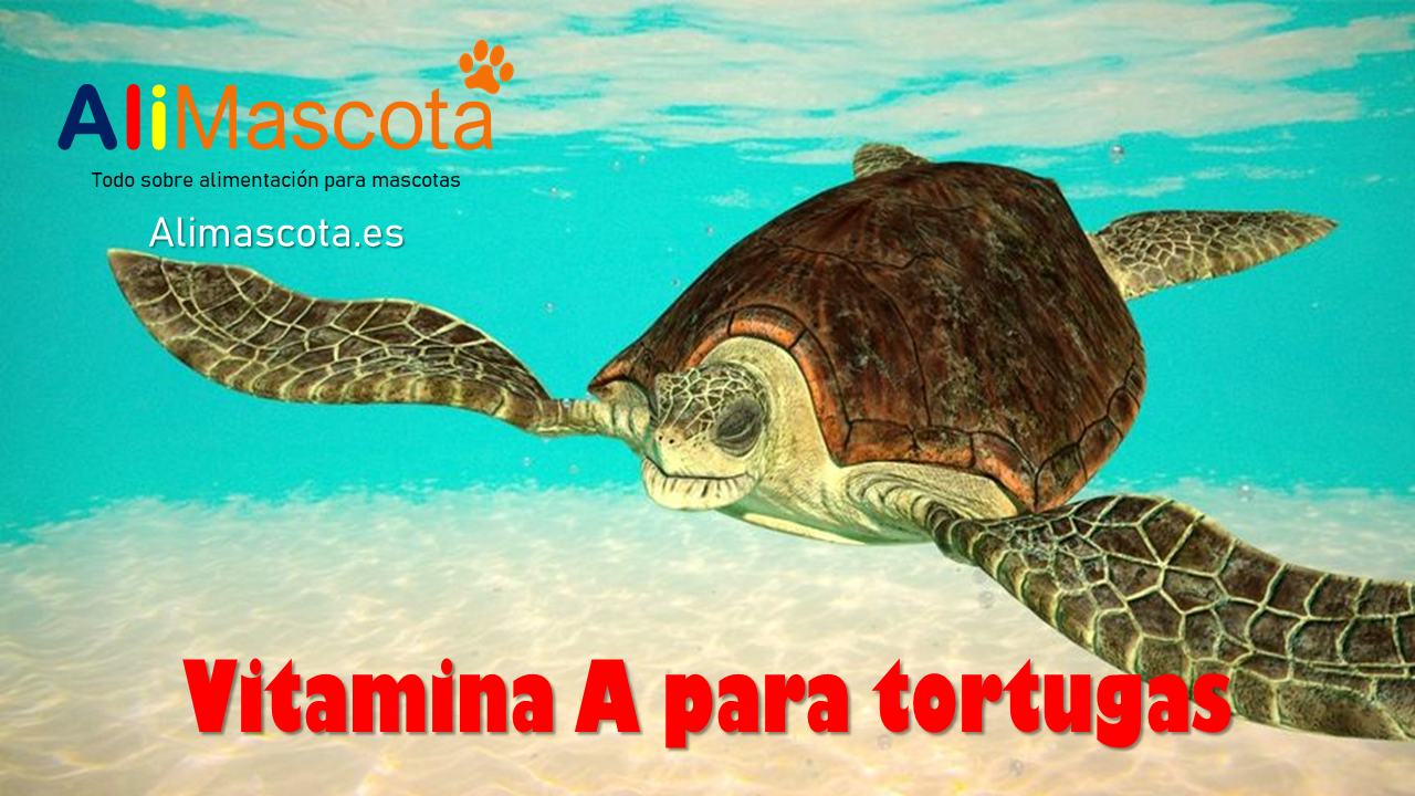 Vitaminas A para tortugas