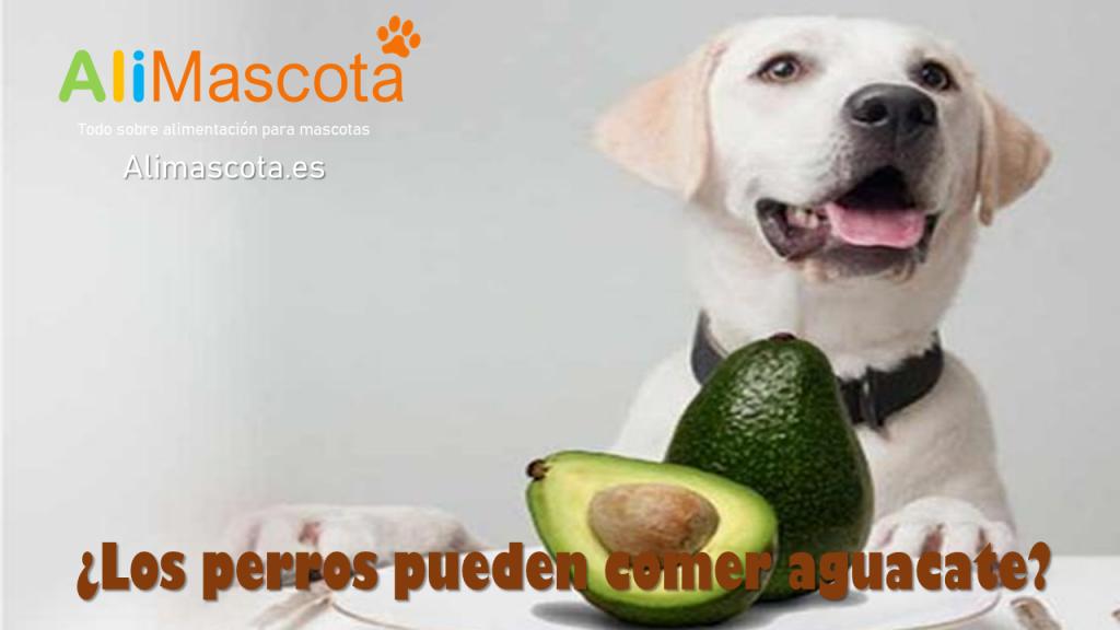 Los perros pueden comer aguacate