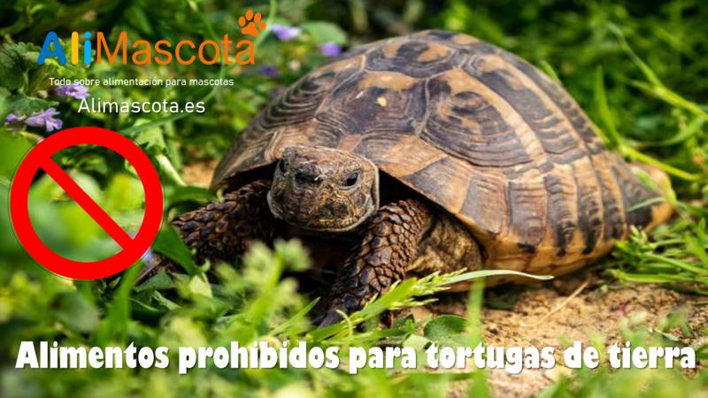 Alimentos prohibidos para tortugas de tierra