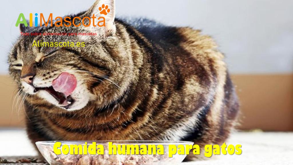 Comida humana para gatos