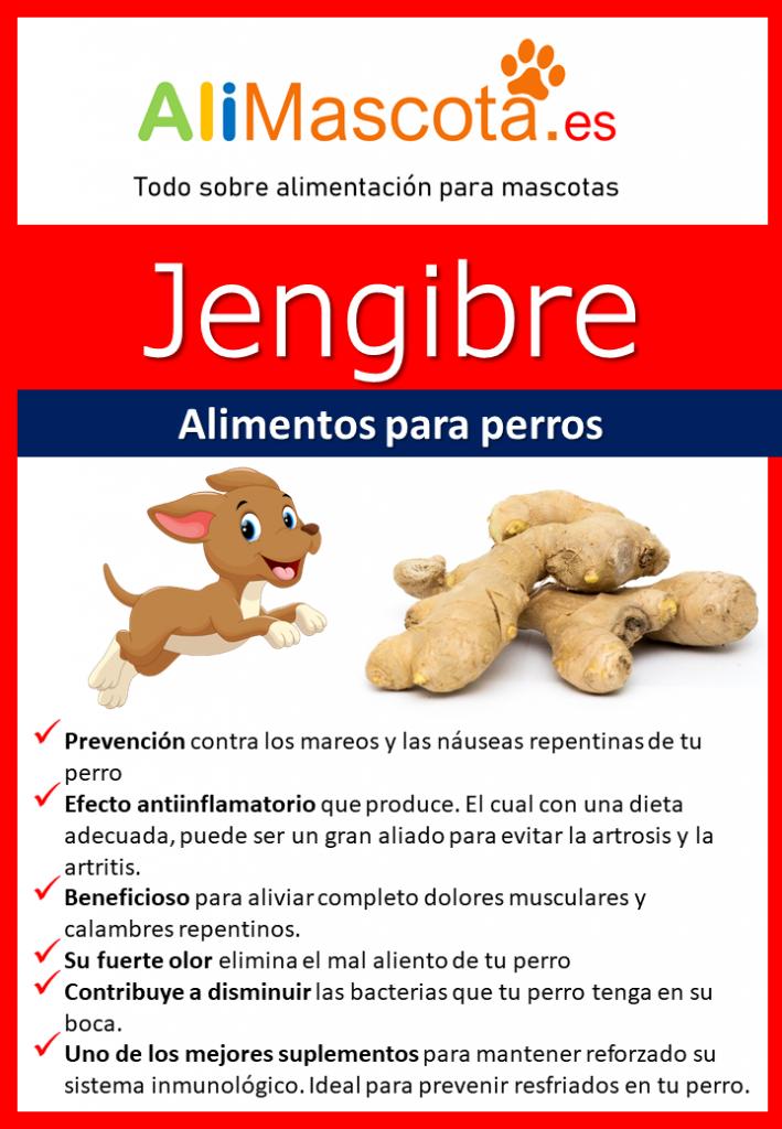 Jengibre para perros