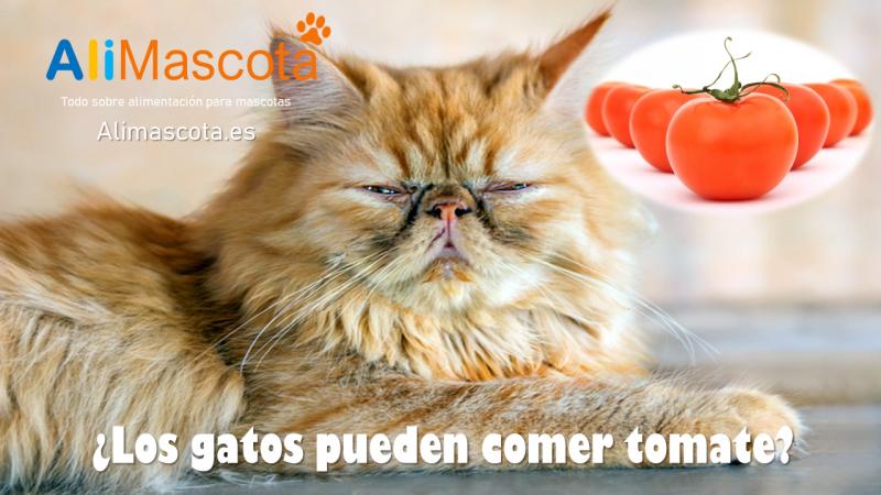 Los gatos pueden comer tomate